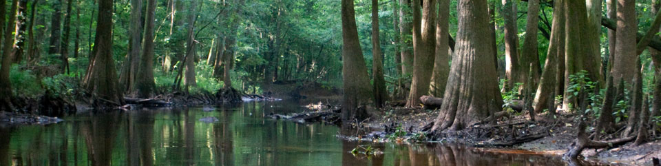 12 Cool Things To Do In South Carolina Scoutology